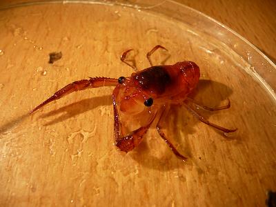 JCR_200_45_lobster