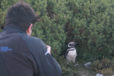 JCR_200_4_portugesescientist-shooting-penguin